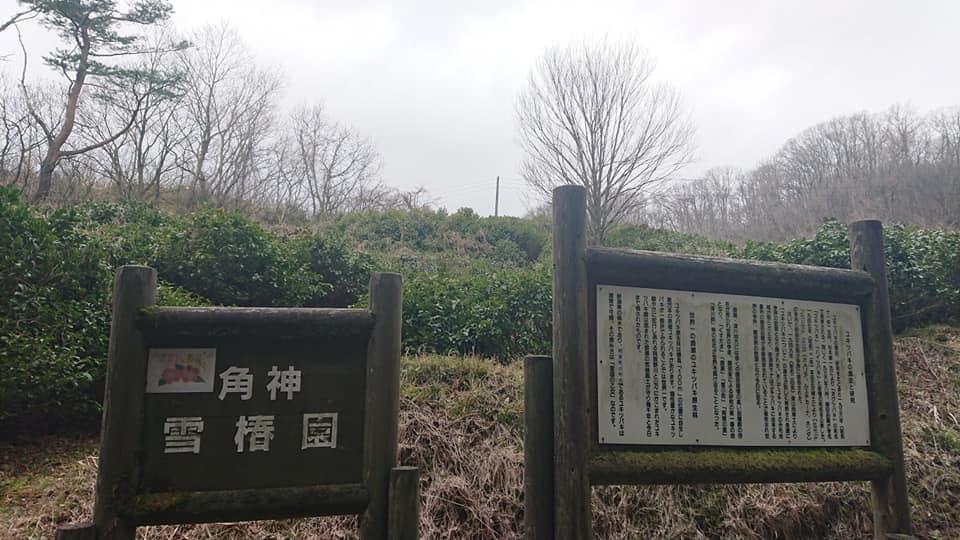 200322角神雪椿園001