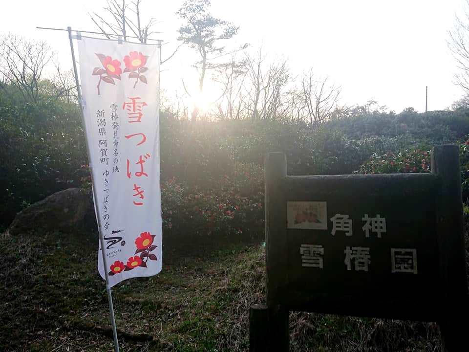 200417角神雪椿園001