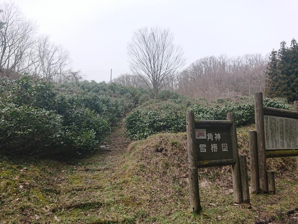210327角神雪椿園001