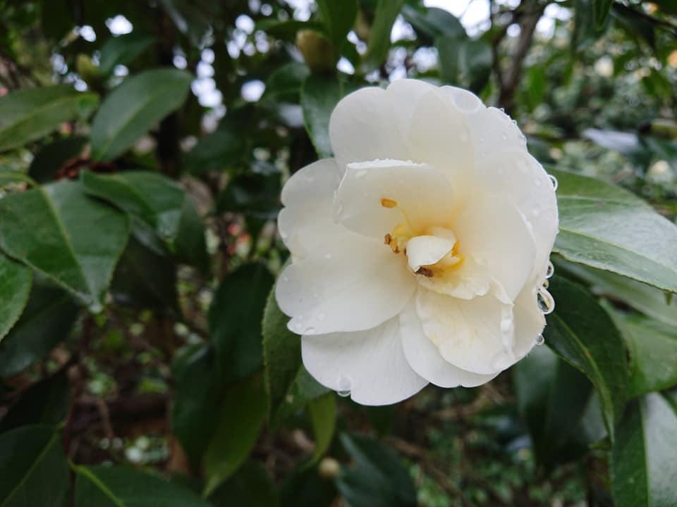 200328訪春園002