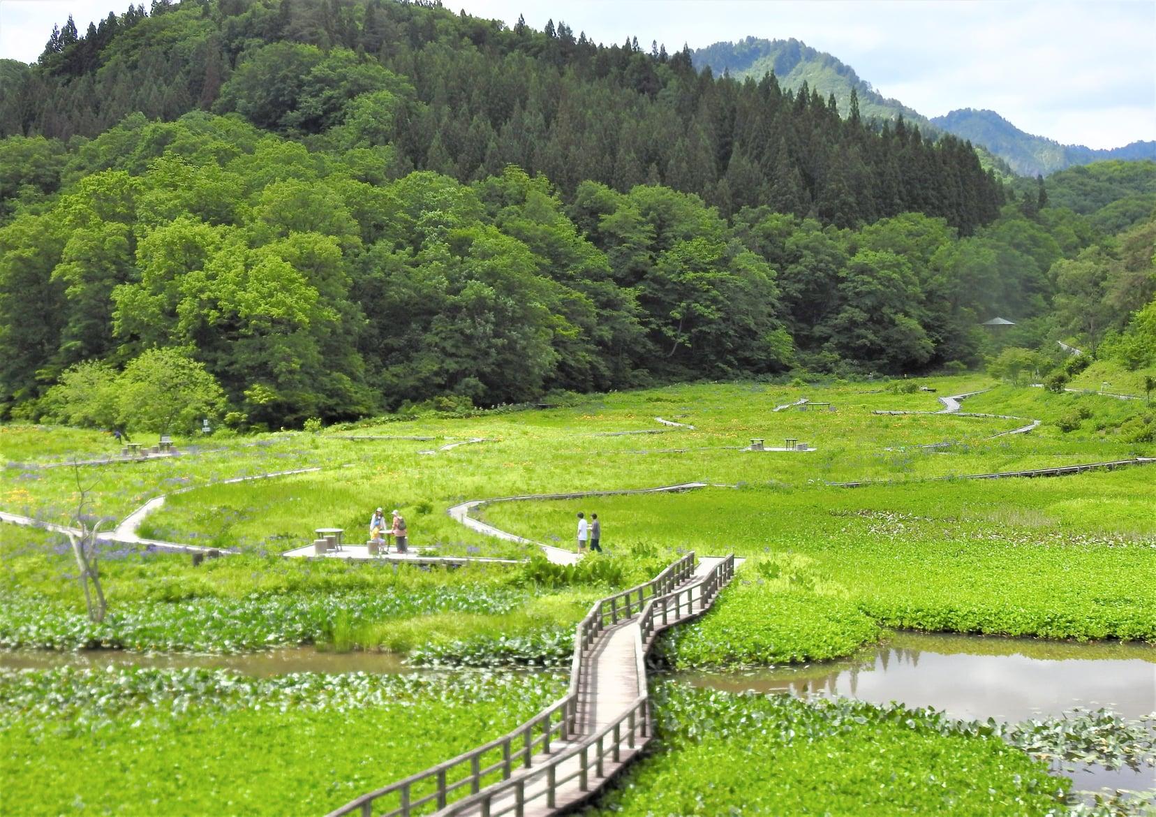 湿原一帯は緑の絨毯のよう!