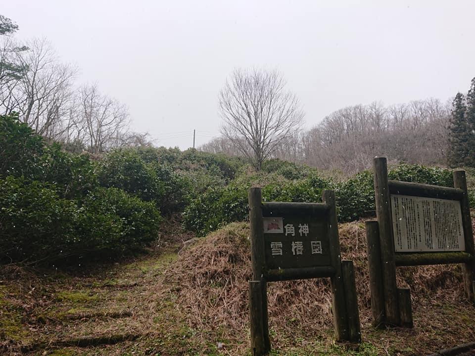 200316角神雪椿園001