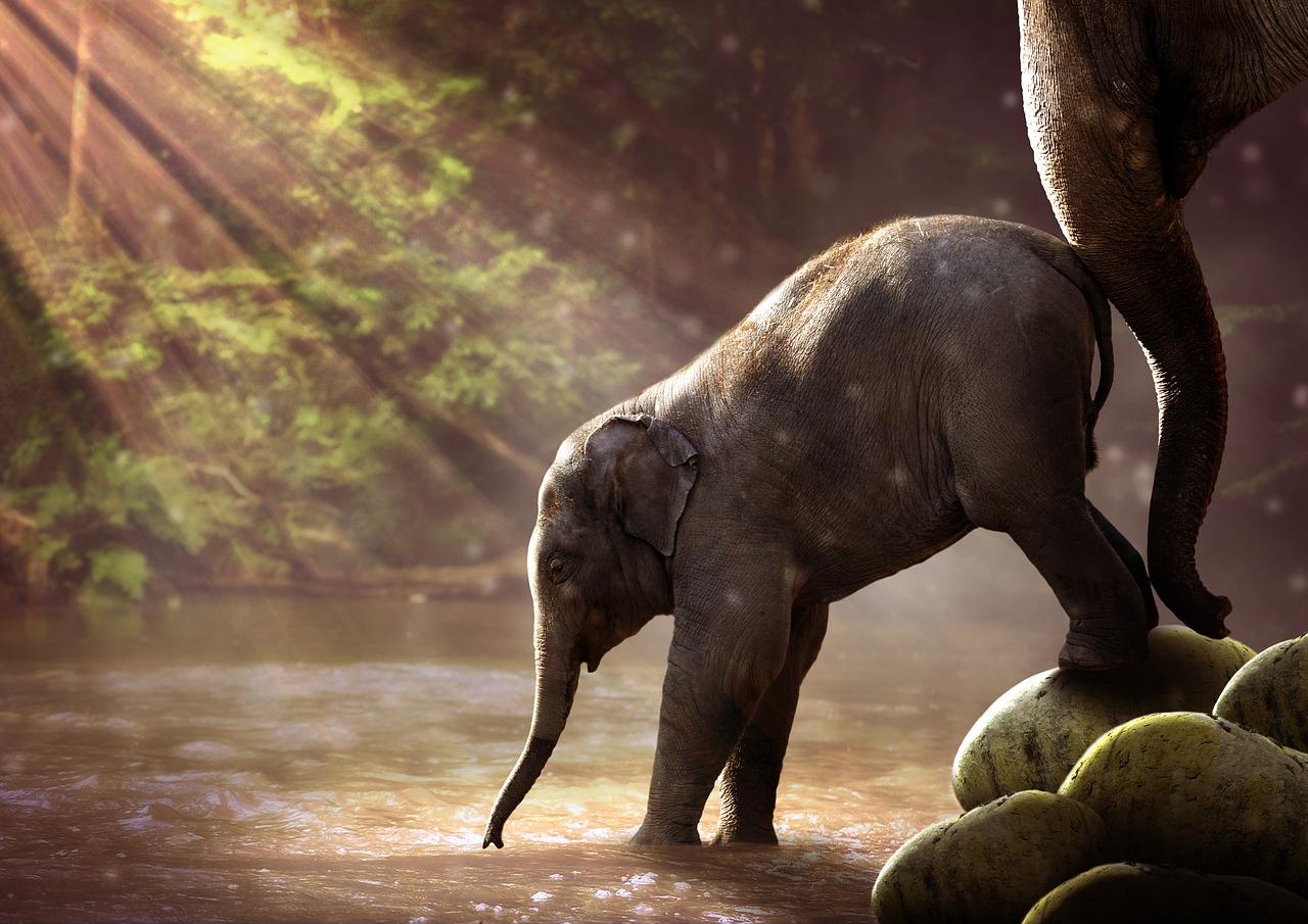 Babyelefanten gefährden die Gesundheit unserer Kinder!