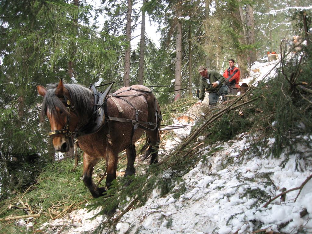 Holztransport mit dem Pferd