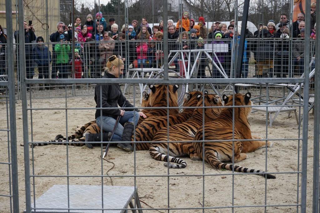 ...Die Tigershow ist immer ein Highlight! Und wir haben alle Spaß und Freude...