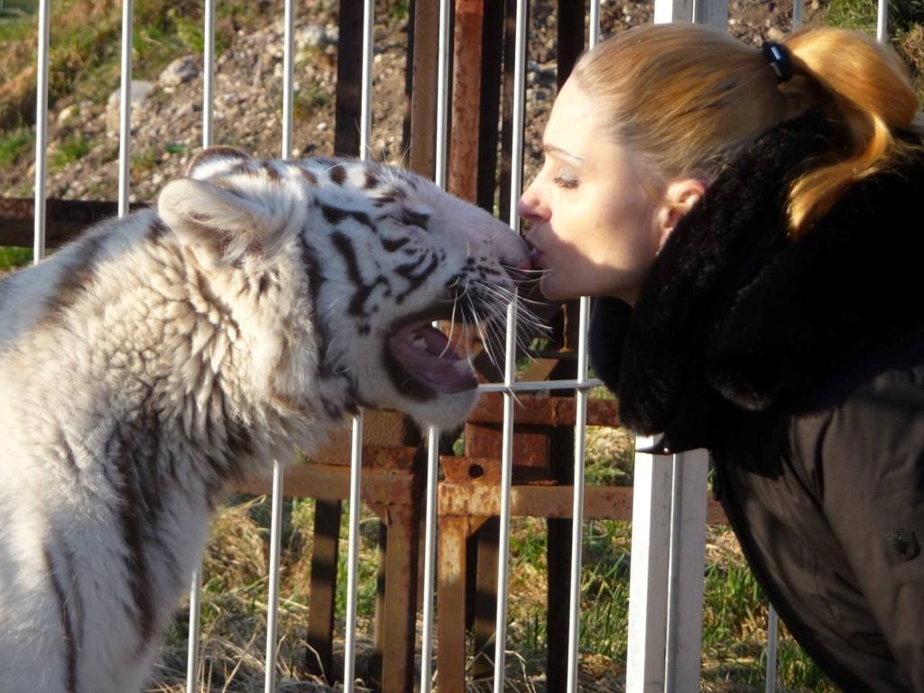 ... Neuvorstellung meiner weißen Tigermaus Saphira...