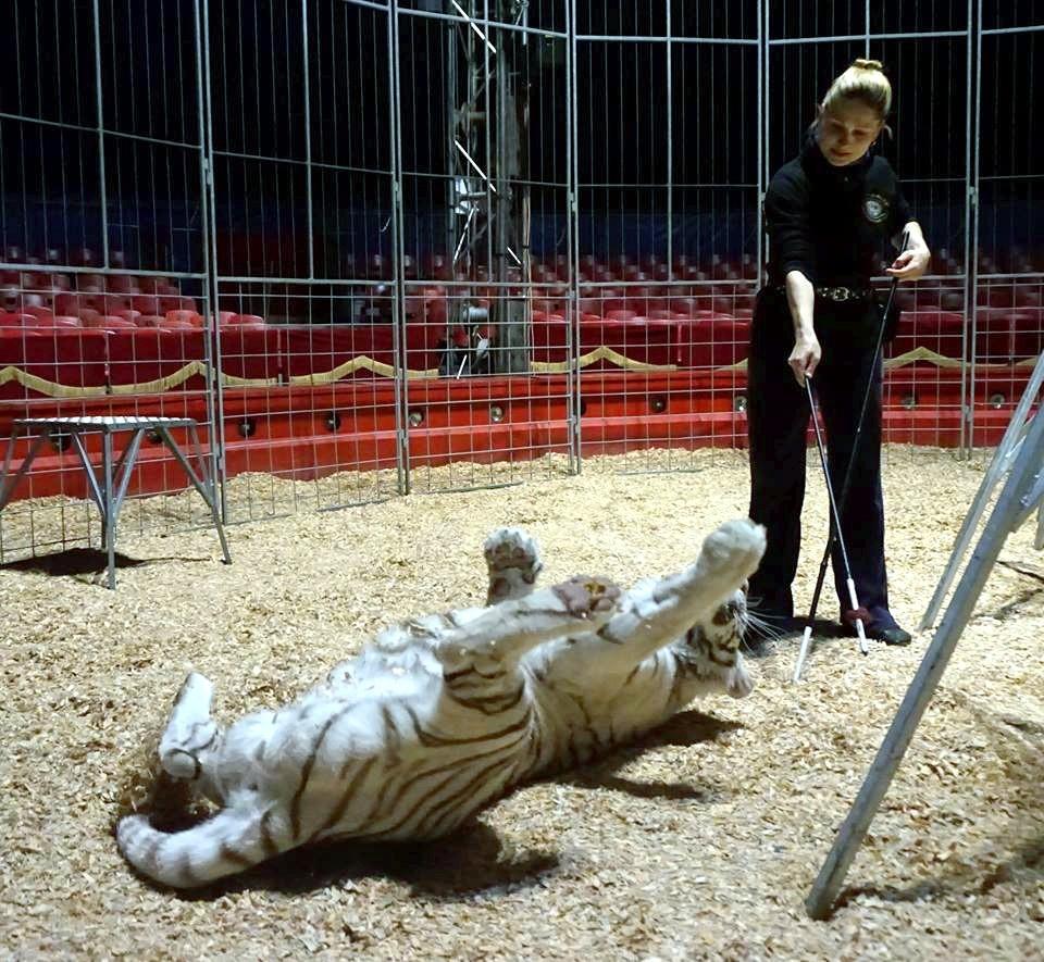Das Rollen zeigt immer den schönen Kuschelbauch meiner Saphira.