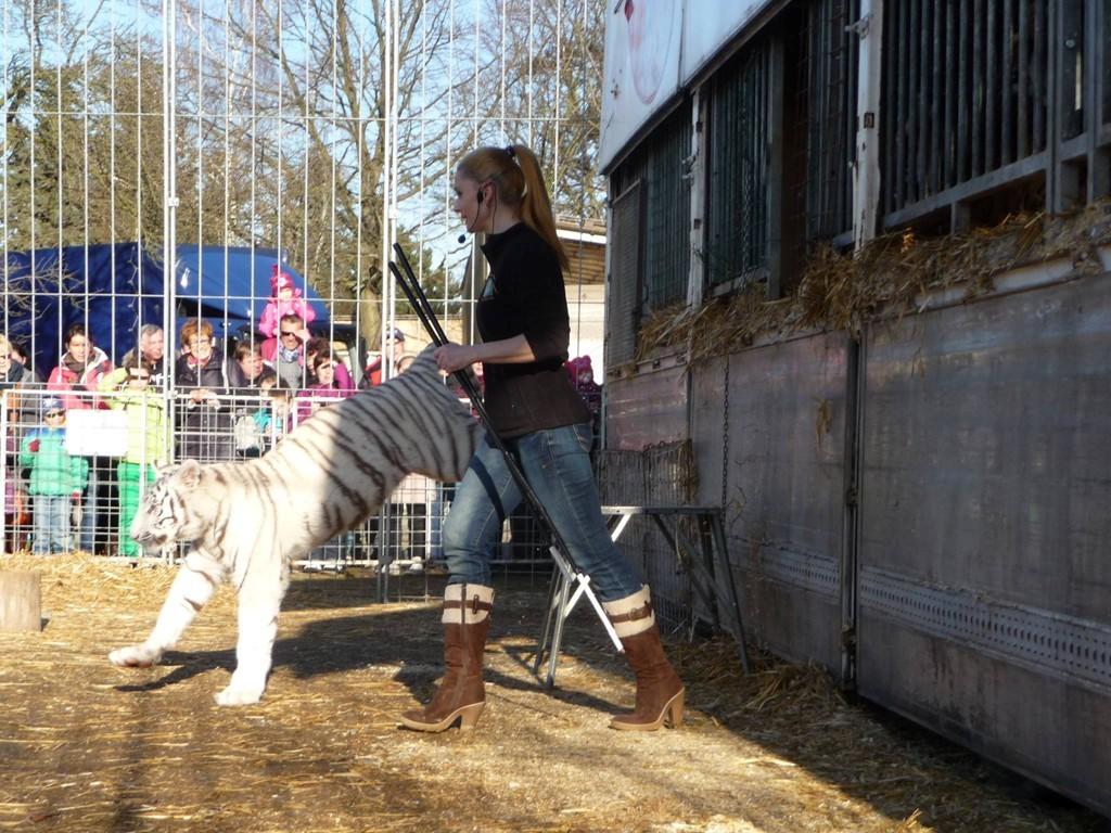 ... Mein Tigerkind Saphira geht schon ganz souverän in ihre separate Freianlage...