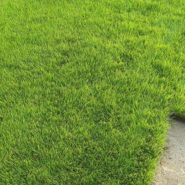 trawa z folii, trawa z rolki, trawa na plantacji