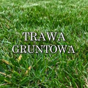 trawa gruntowa, trawa z rolki, trawa na plantacji