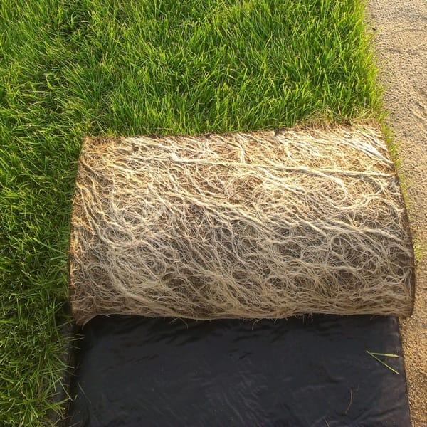trawa z rolki, trawa z folii, trawa na plantacji