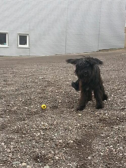 mit 8 Monaten - spielen mit ihrem Kong :-)