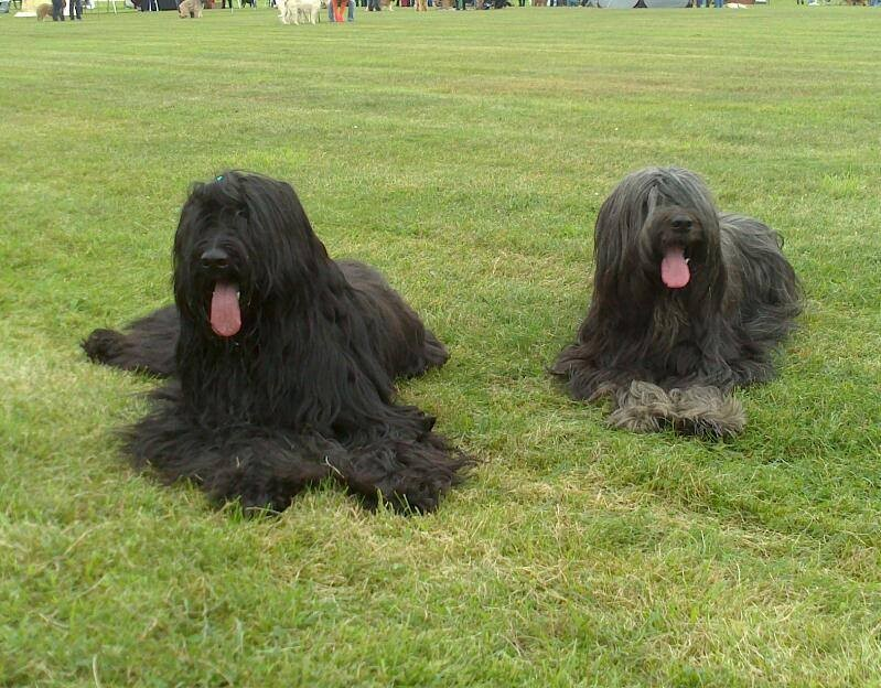 Gimli und Nayla (Schwester Gomera)