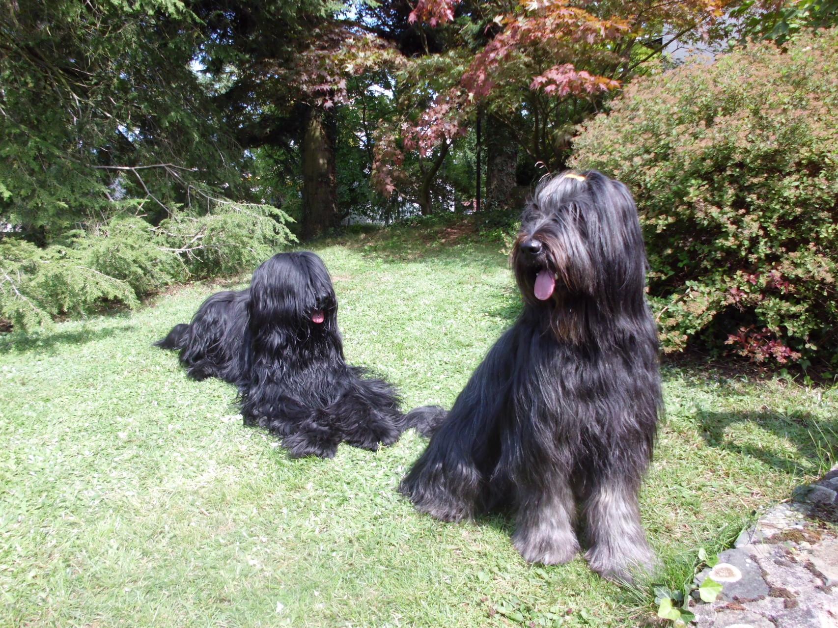 Gimli und Yazoo (Schwester Granini)