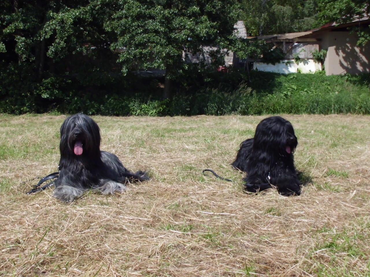 Schwesterchen und Brüderchen: Nayla (Gomera) und Gimli