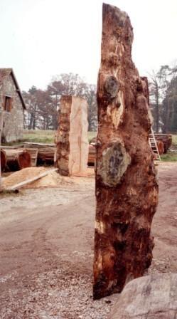 découpes de la bille de chêne