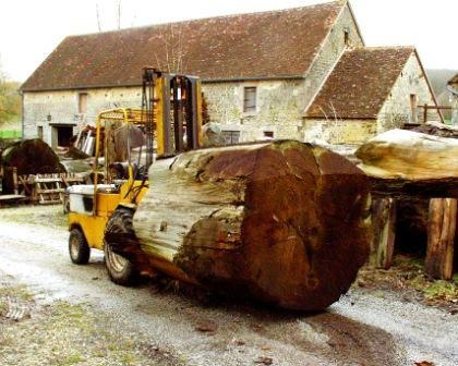 bille de bois de séquoia