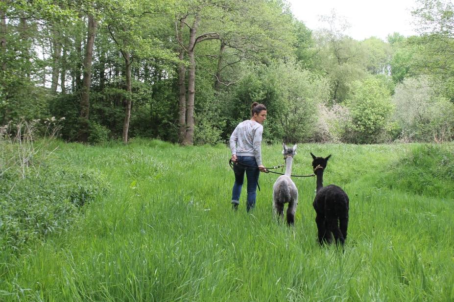 Die Sofazeit ist vorbei - es geht mit unseren beiden Alpakas Greta und Peppa raus in die Natur