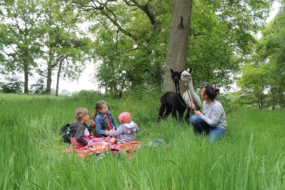 Ein Picknick im Grünen mit zwei Alpakas an der Seite ist ein besonderes Erlebnis!
