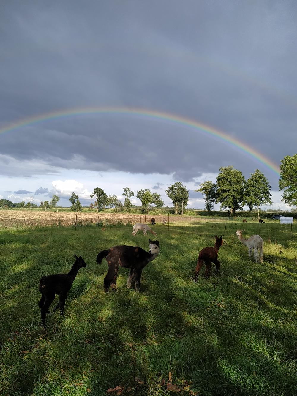 Glanz unterm Regenbogen 🌈
