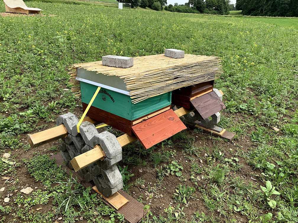 Die Honigbienen sind da