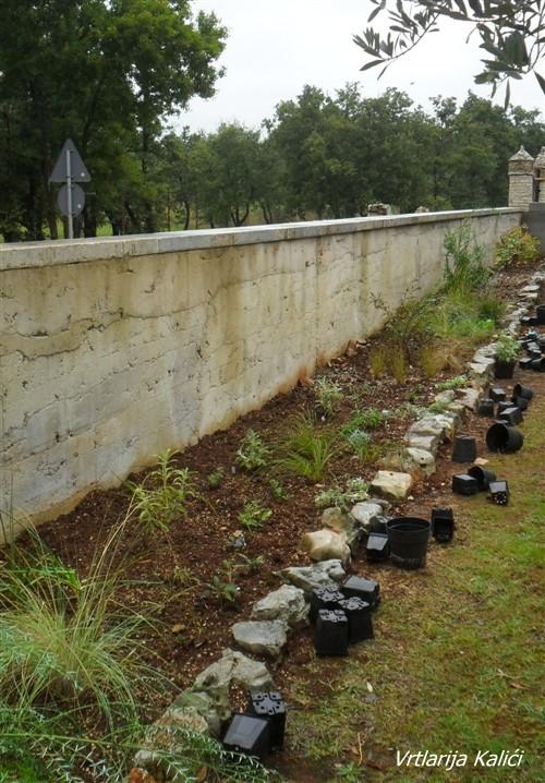 Sadnja biljaka u gredicu: 10.09.2014