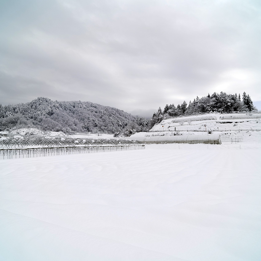 大雪 LeicaTL2+ ライカ スーパー・バリオ・エルマーTL f3.5–4.5/11–23mm ASPH.