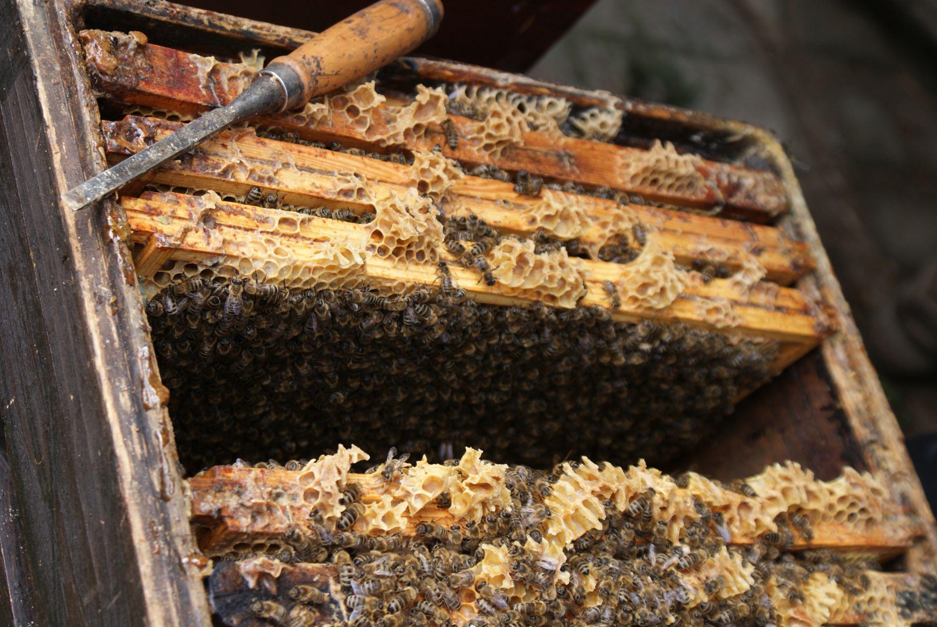 Die Bienenvölker ziehen um.