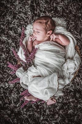 Neugeborenes Baby in ein weisses Leintuch gehüllt mit Heidekraut im Körbchen inszeniert fotografiert von der Schweizer Familien Fotografin Monkeyjolie