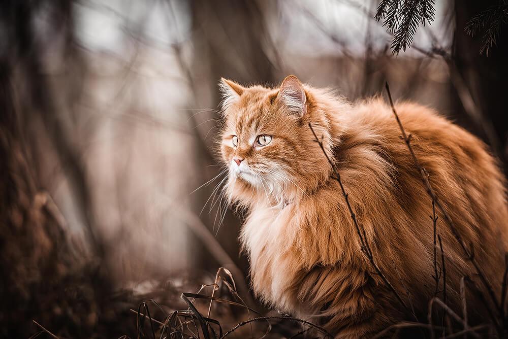 Rote Langhaarige Katze mit grünen Augen sitzt im Unterholz fotografiert von der Hundefotografin Monkeyjolie