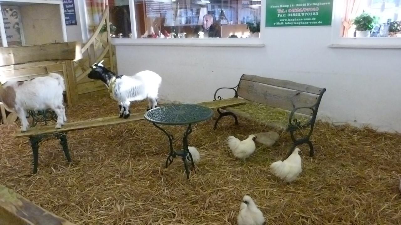 Dieses Jahr waren auch Ziegen auf der Liethschau