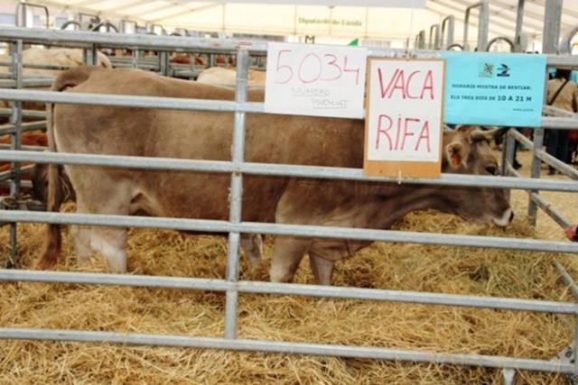 Denúncia ecologista per la rifa d'animals a Solsona