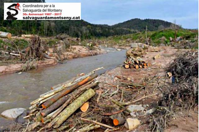 Deu organitzacions ecologistes denunciem davant de la Fiscalia de Medi Ambient la destrucció del bosc de ribera a la riera d'Arbúcies