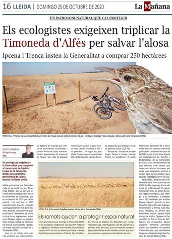 Els ecologistes exigeixen triplicar la Timoneda d'Alfés per salvar l'alosa becuda