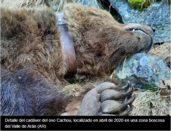 Més investigats en el enverinament de Cachou