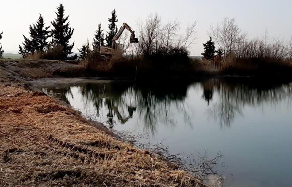 NOTA DE PREMSA: Destrucció de la vegetació de ribera perimetral de 5 basses de reg de Vallmanya a Alcarràs