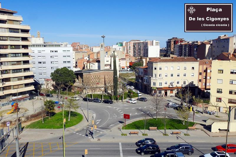 Ipcena demana a l'Ajuntament de Lleida que la plaça de l'Exèrcit passi a anomenar-se de les Cigonyes