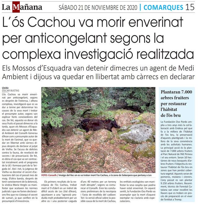 L'ós Cachou, enverinat amb etilenglicol, l'ingredient primari dels anticongelants dels vehicles