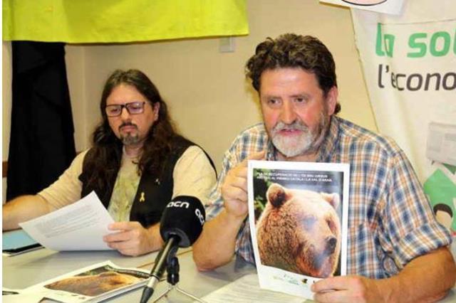 Ipcena critica la gestió de la Generalitat sobre la problemàtica de l'os al Pallars i Val d'Aran