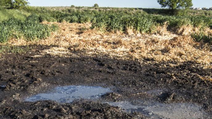 Ipcena denuncia un abocament de 50.000 litres de purins a Preixan