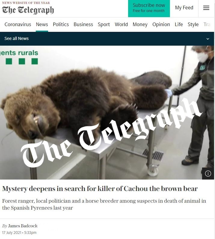El misteri aprofundeix a la recerca de l'assassí de l'ós bru Cachou