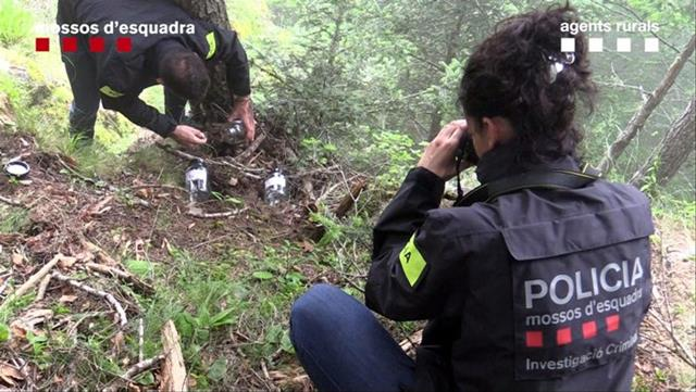 Trama al darrere de la mort de l'ós Cachou