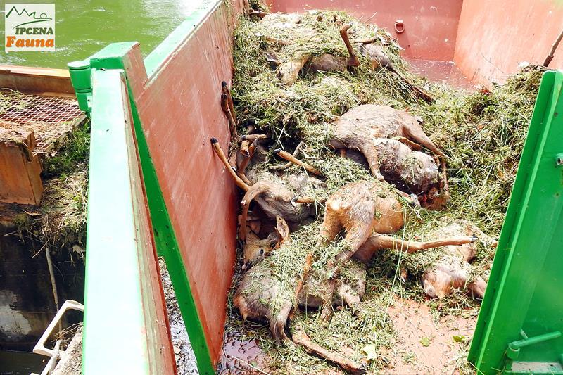 Els canals d'Urgell una trampa mortal per la fauna que cal evitar