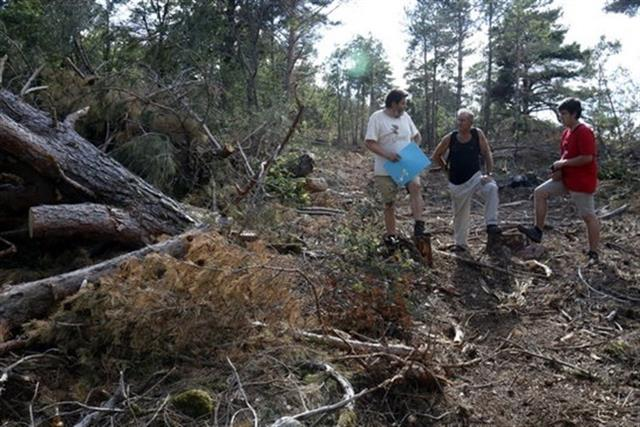 Ipcena acusa a Forestal Catalana de Negligències en la tala d'arbres