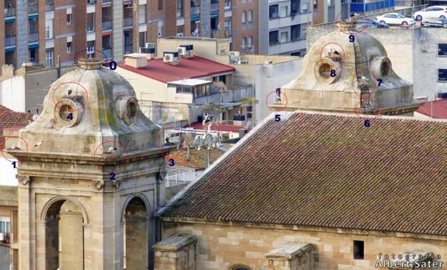 Ipcena reclama que es mantinguin les cigonyes a la Catedral