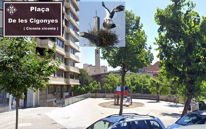 Ipcena proposarem que la plaça de l'Exèrcit passi a anomenar-se de les Cigonyes