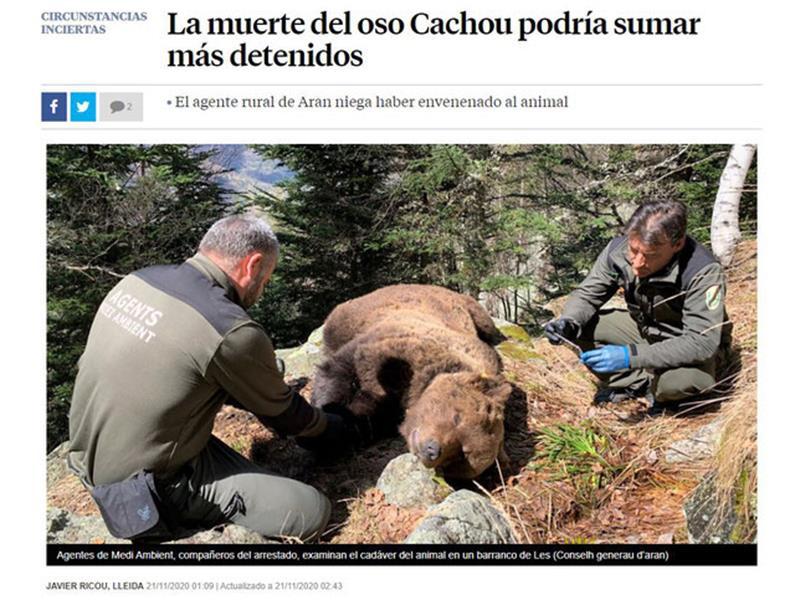 La mort de l'ós Cachou podria sumar més detinguts