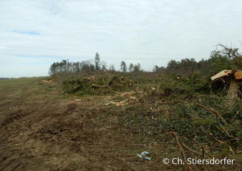 Die Fläche des neuen Gewerbegebietes an der Umgehungsstraße Burglengenfeld nach der Rodung (24.2.2019): Auf Hinweise der Kartierer, wegen der großen Artenvielfalt die Planung zu überdenken, wurde keine Rücksicht genommen.