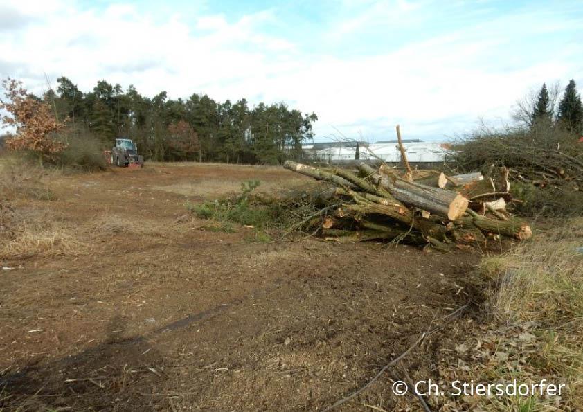 """In diesen Tagen wird ein kartiertes Biotop zwischen Maxhütte und Teublitz für das Ge-werbegebiet """"Teublitz Süd-Ost"""" zerstört (1.2.2020). Geschützte Arten wie Zauneidechsen und Neuntöter müssen weichen. Wohin eigentlich noch?"""