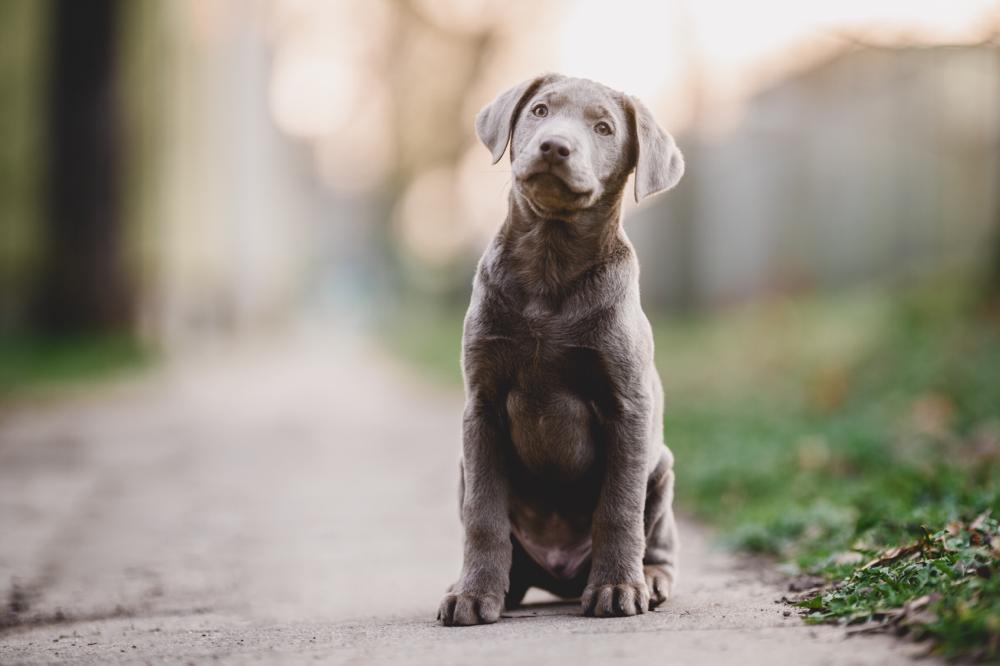 Hundeportrait Welpe